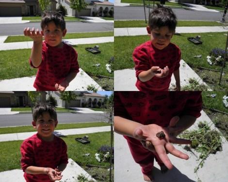papi the worm farmer