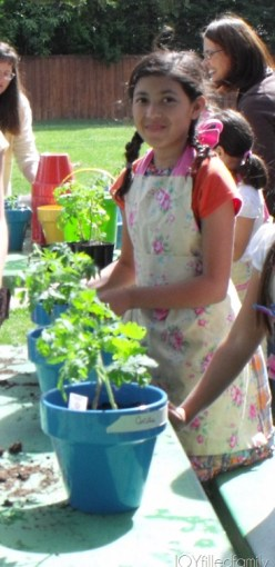 RMGS Sparkles with tomato plant