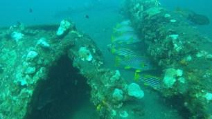 Fish at the Shipwreck