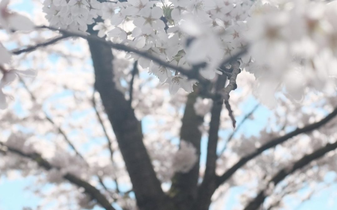Haïkus de printemps
