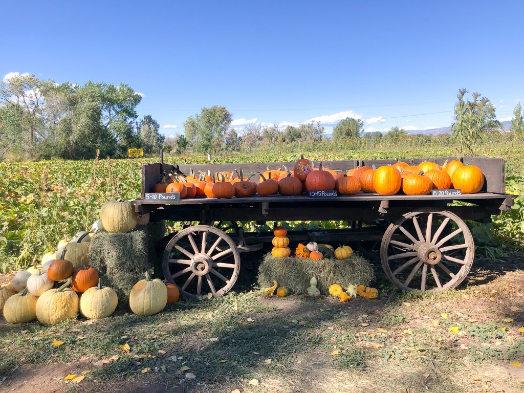 Pumpkins on a wagon at the Covered Bridge Pumpkin Patch