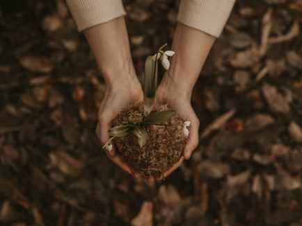Top down perspective of hands holding a mound of dirt with both hands with small white petaled flowers. Joyful Empath offers spiritual therapy in Berkeley, CA, individual therapy in Berkeley, CA, and more. Contact us today to get in touch with an HSP therapist in Berkeley today.
