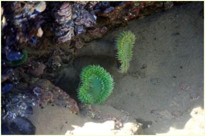 Sea anemones!