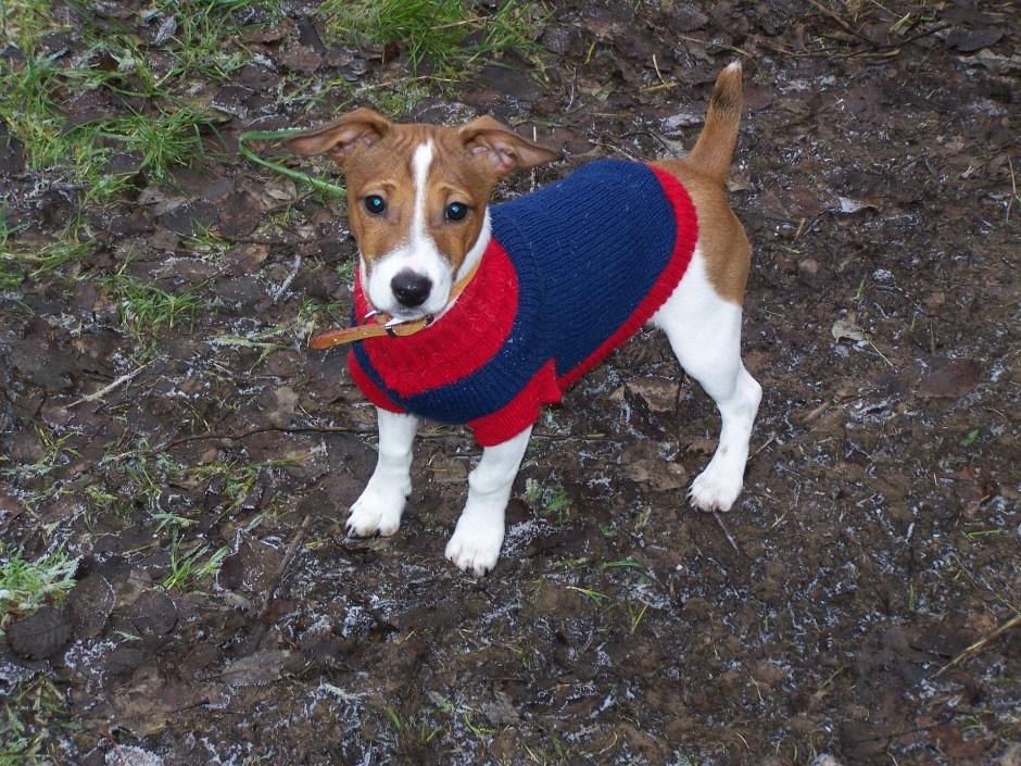 puppy-1318413_1920