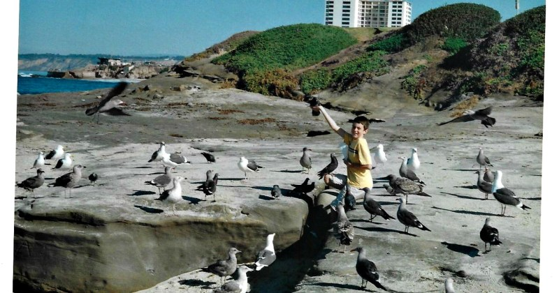 young boy on the beach surrounded by seagulls
