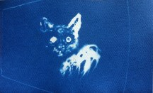 Snake Eyes (Night Vision), 2014, cyanotype, 3x5 inches