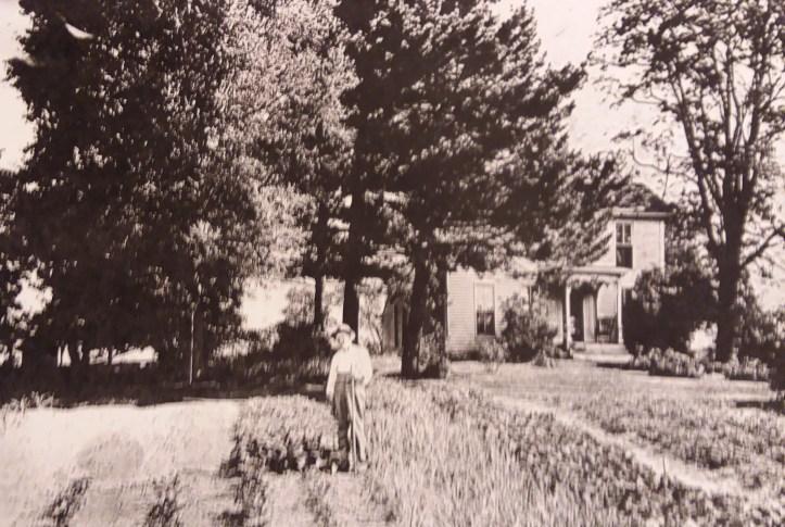Thomasgarden (2)