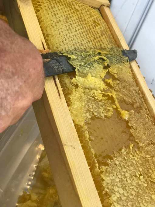 honey 2 joyforganics