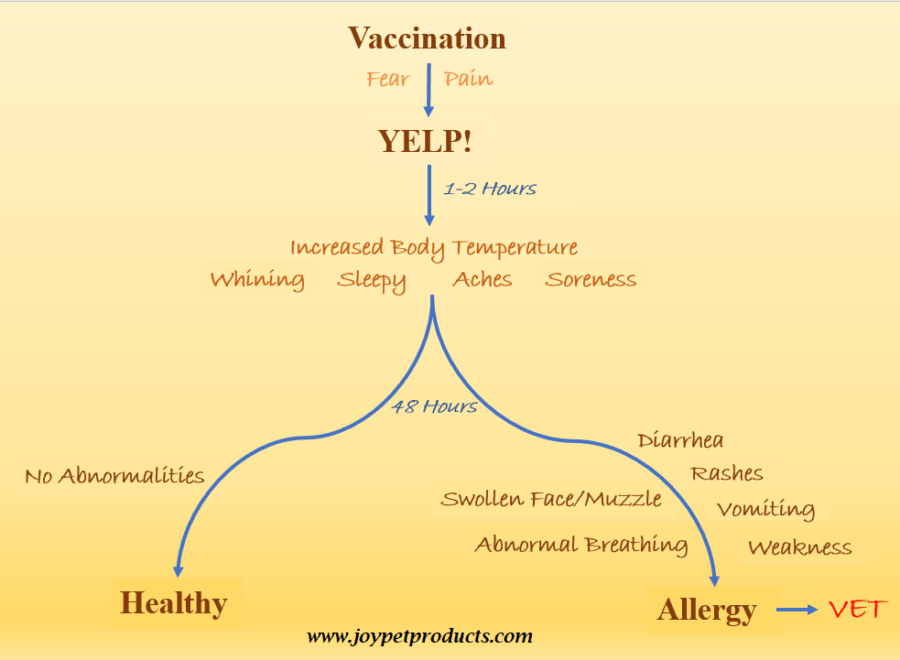 Puppy yelping after vaccinations? Symptoms flowchart