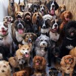 11 Most Healthy Dog Breeds - Pals That Live Long