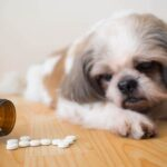 What Can I Give My Dog For Pain Relief