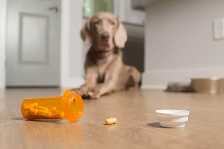 How Long Will Your Dog Be On Medication?