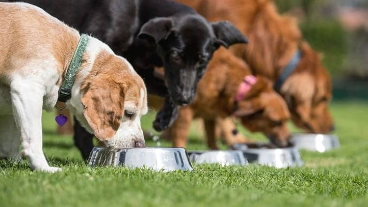 Dog Breed And Dog Food: What You Should Know