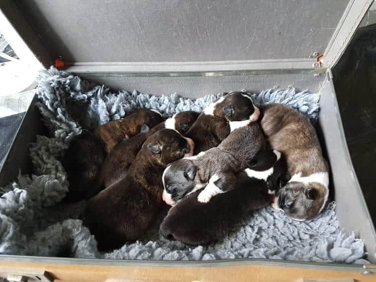 Ollie and his littermates sleeping together in a box