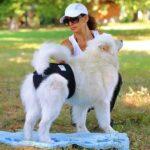 Guide To Choosing A Dog Diaper For Your Dog