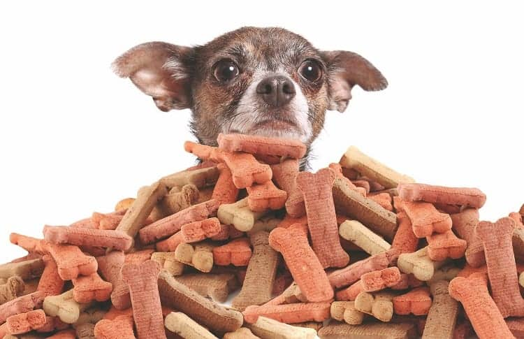 You're Feeding Your Dog Too Many Treats