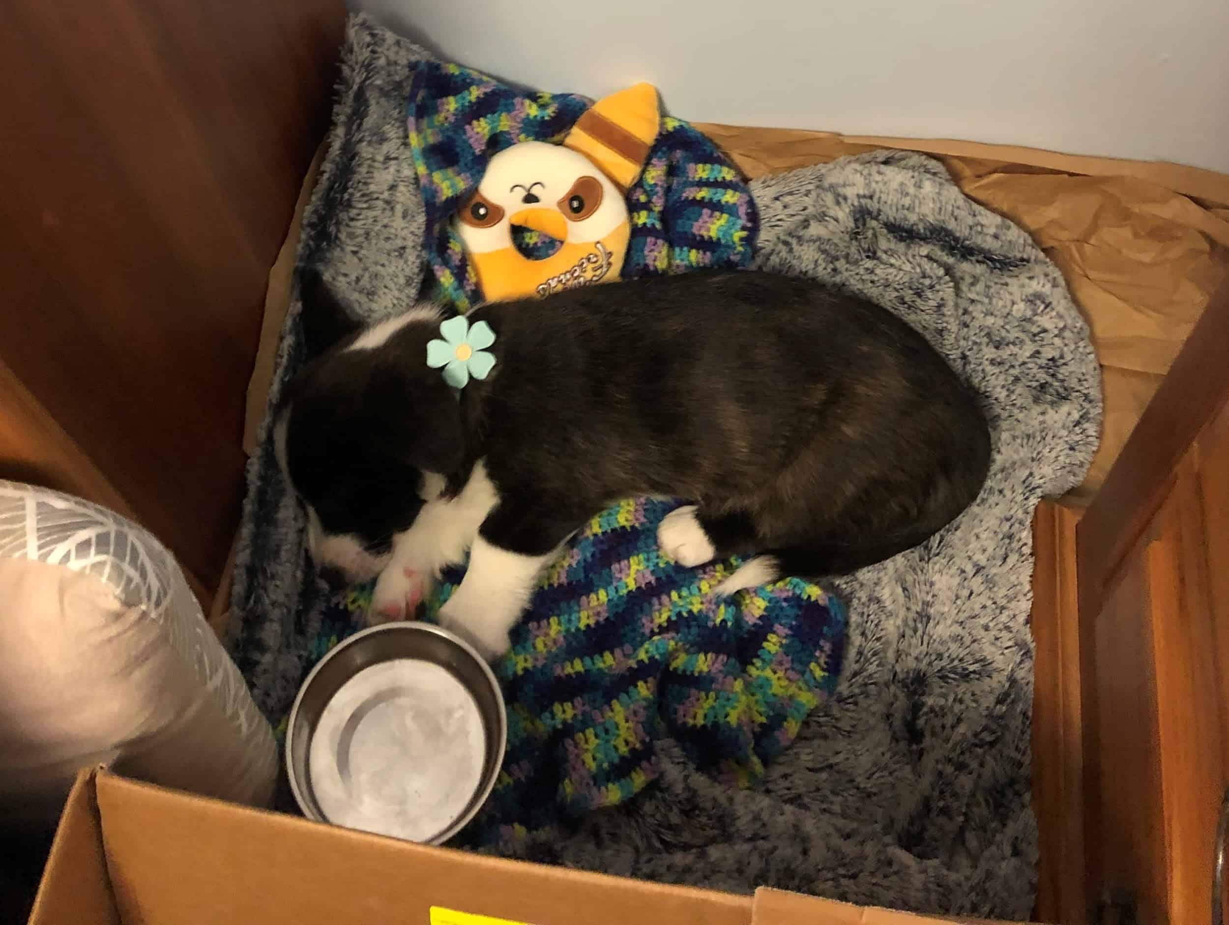 2 month old puppy sleeping soundly in its cozy, custom-made 'bedroom'