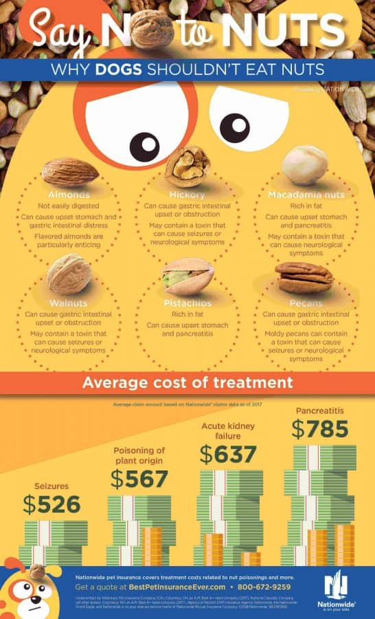 Nut dangers to dogs infographic