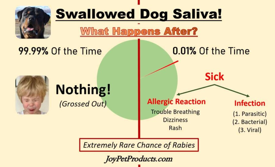 What happens if you swallow dog saliva infographic
