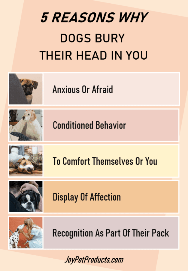 Why dogs bury their head in you infographic
