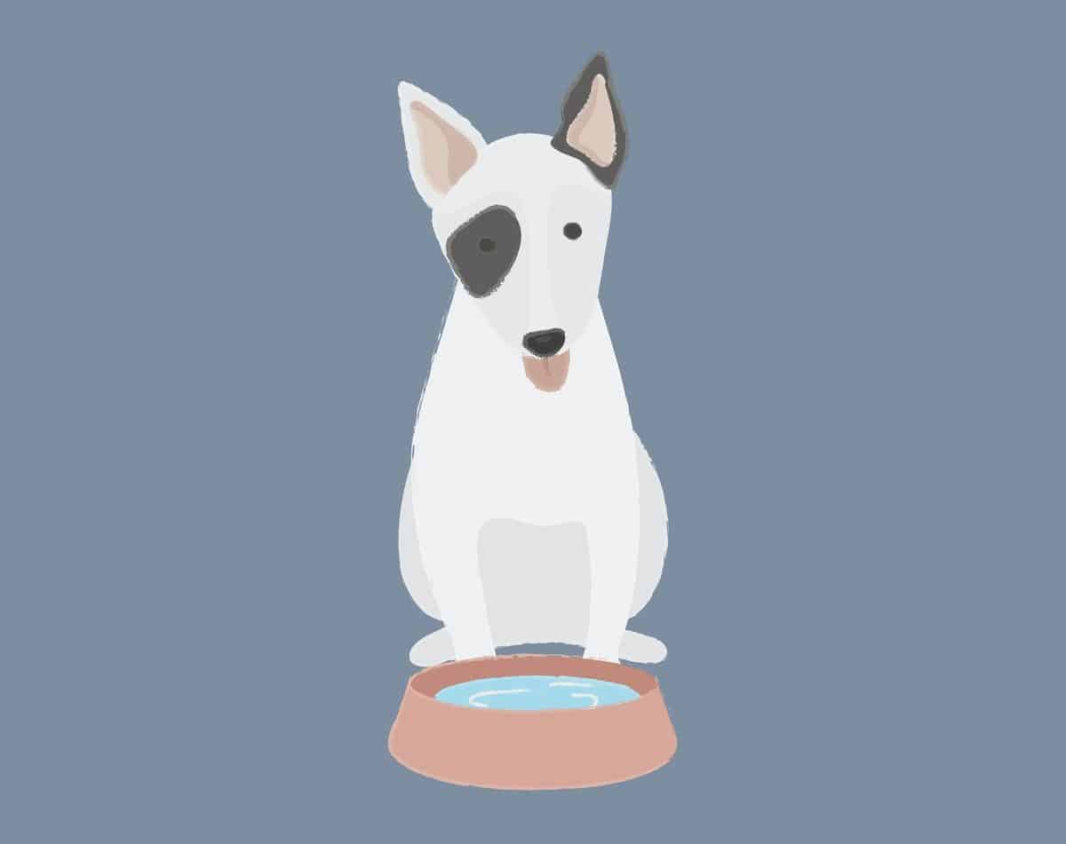 Dog by water bowl illustration