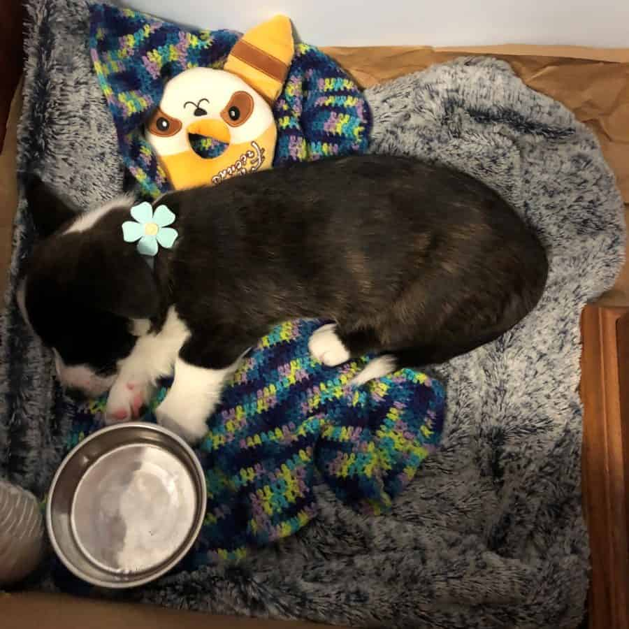 Why do dogs get hiccups when sleeping? Puppy sleeping next to food bowl