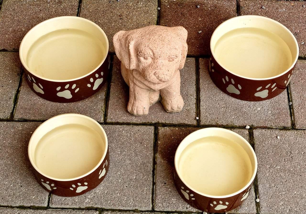 4 dog water bowls together