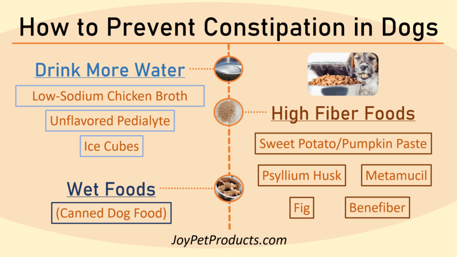Preventing constipation in dogs infographic