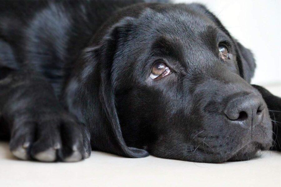 Dog with involuntary eye movements