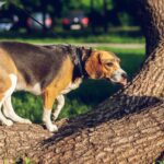 Is bark bad for dogs?