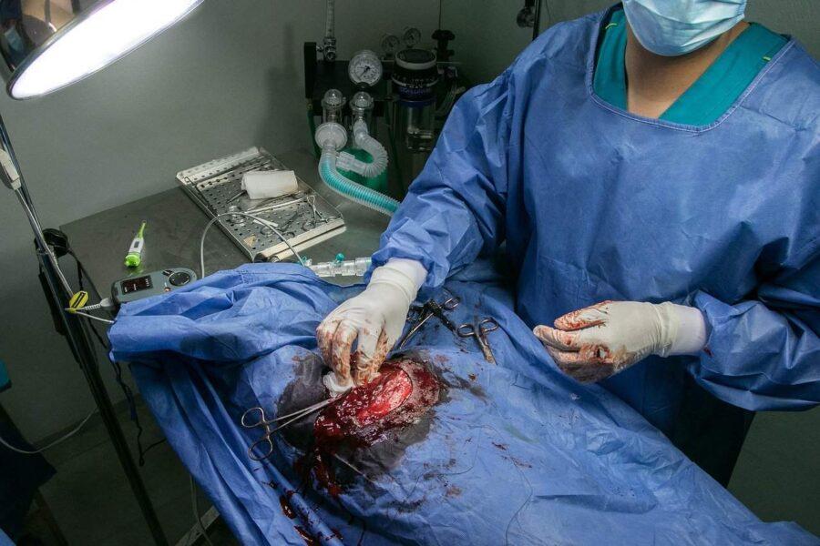 Dog undergoing surgery