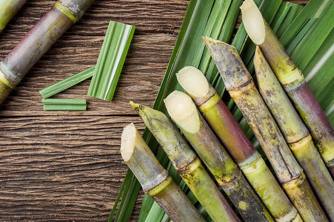 Can dogs eat sugar cane?