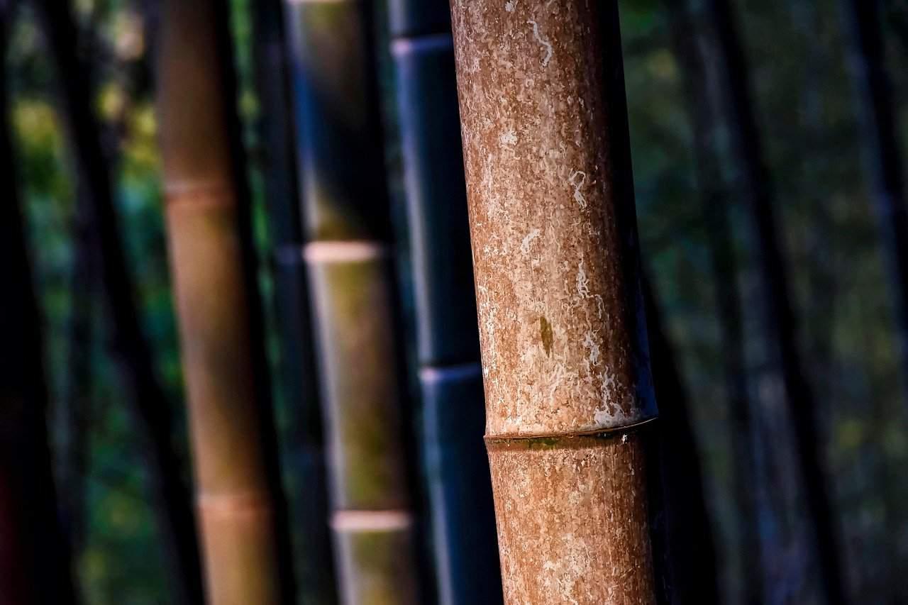 Sugarcane forest