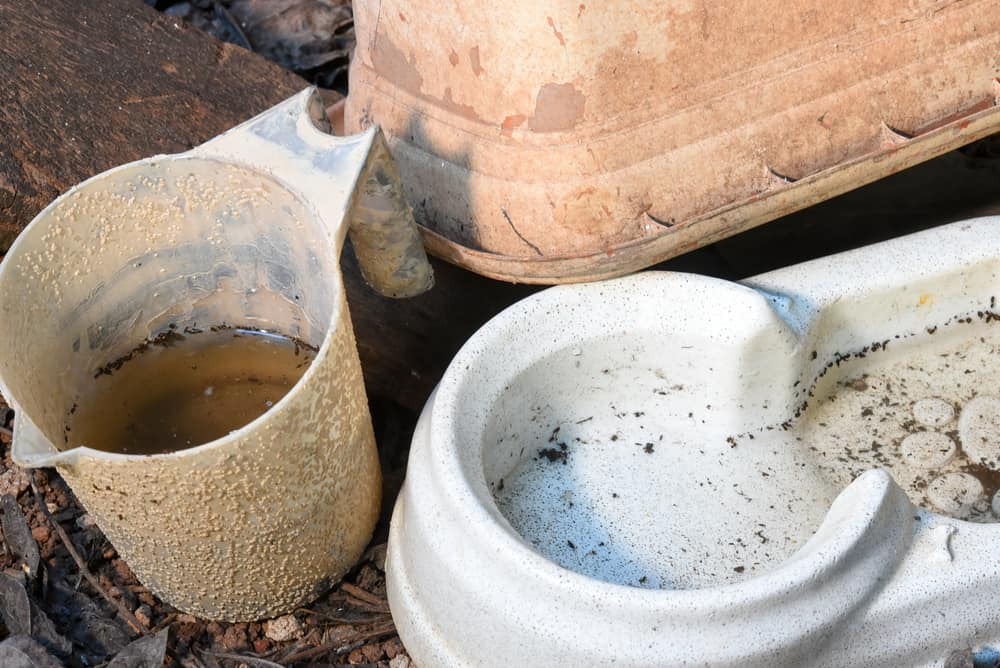 Water bowl and pitcher with stagnant, dirty water