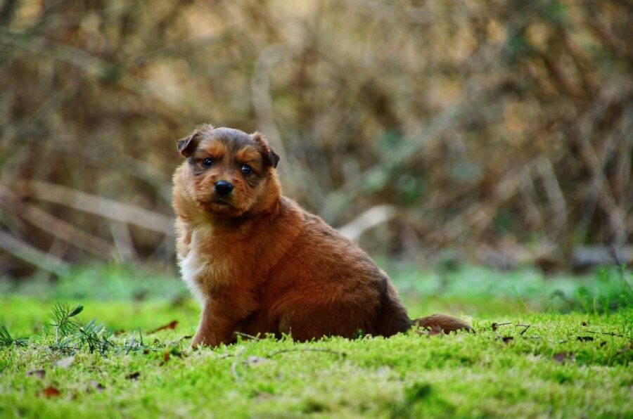 Chubby puppy sitting on grass