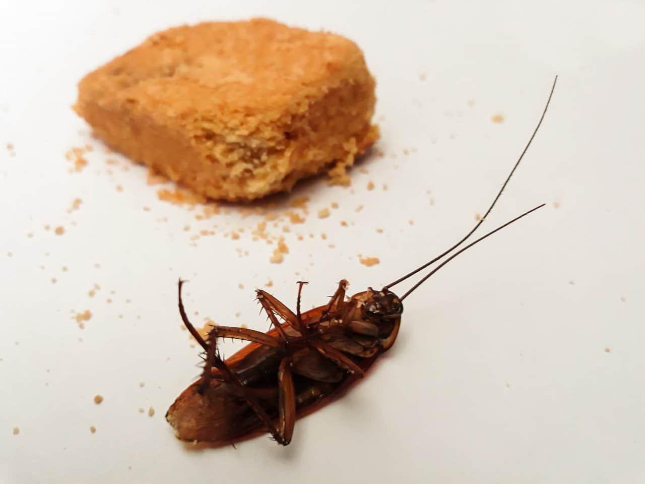 Dog ate combat roach bait!