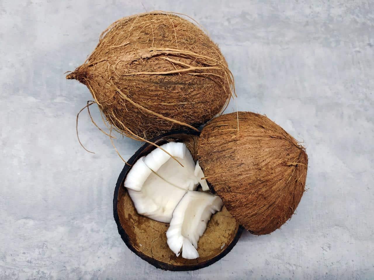 The origin of coconut oil- coconuts