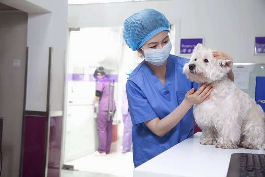 Vet with white dog