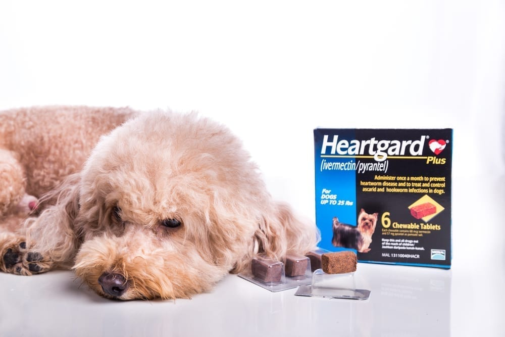 Dog turning away from Heartgard packet