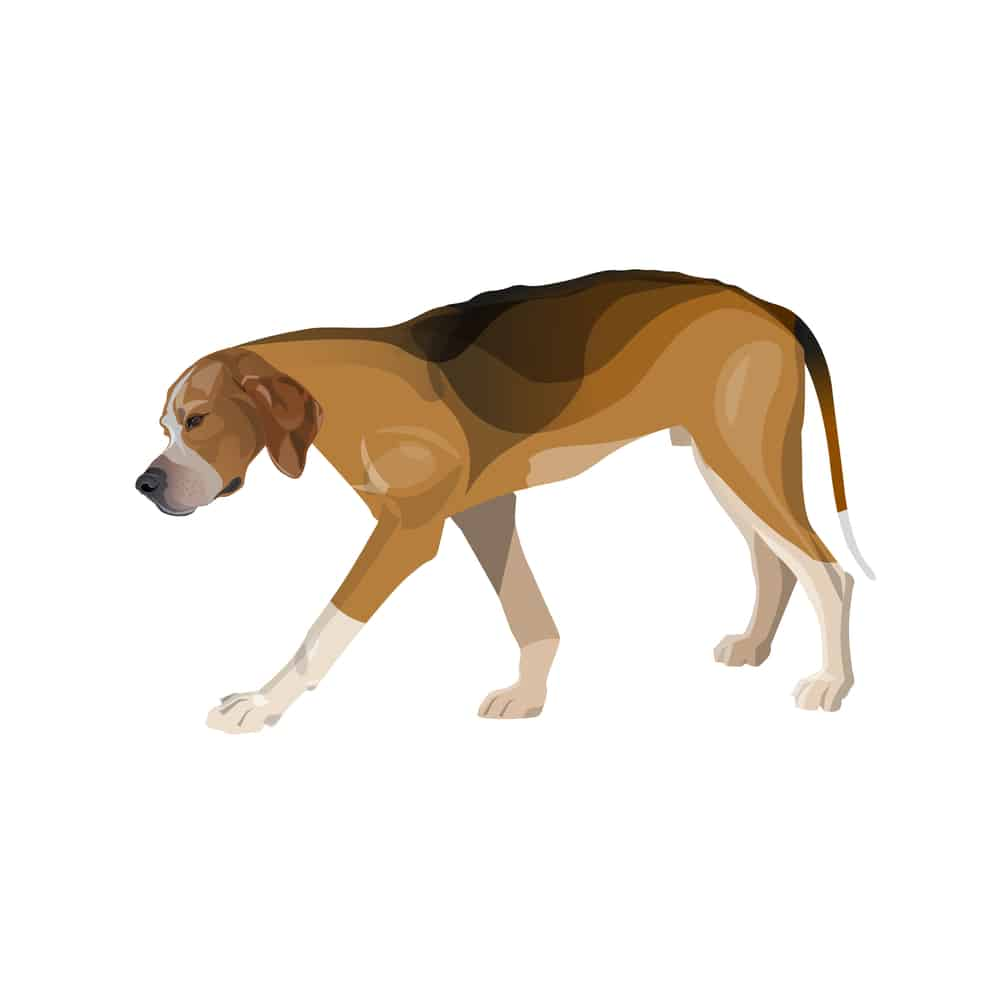 Dog limp graphic