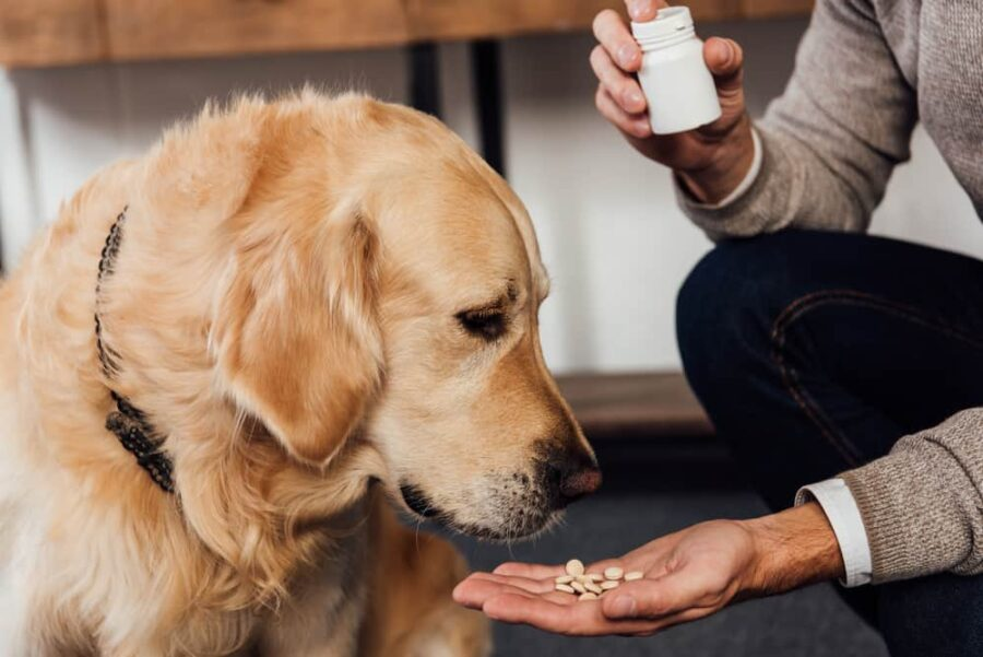 Man giving golden retriever pills