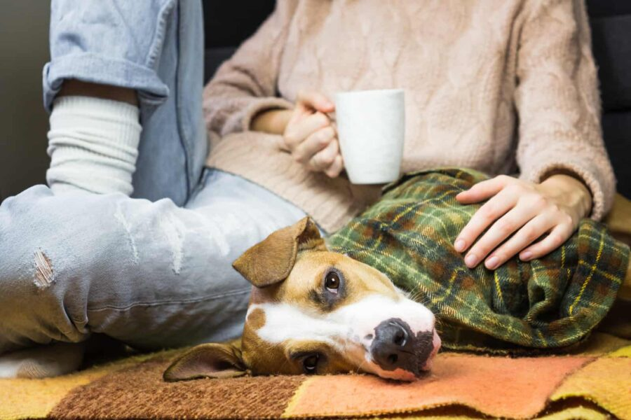 Puppy covered in blanket relaxing with human