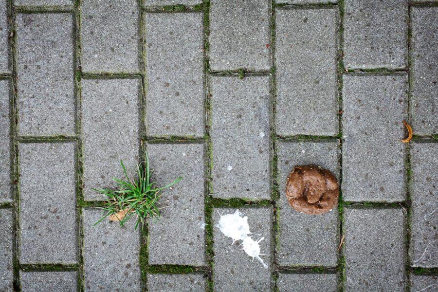 Runny dog poop on sidewalk