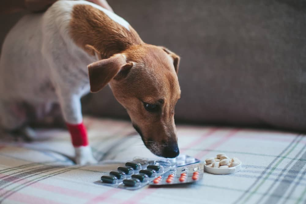 Dangers of heartworm medication