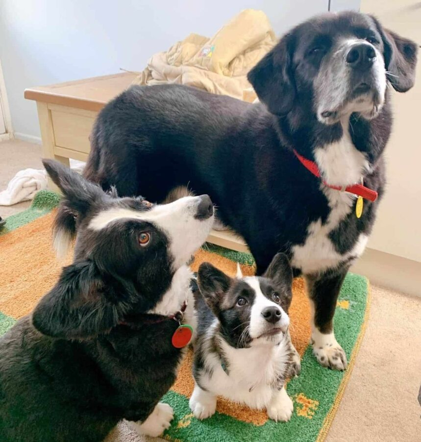 Max, Ollie, and Gogi looking up together