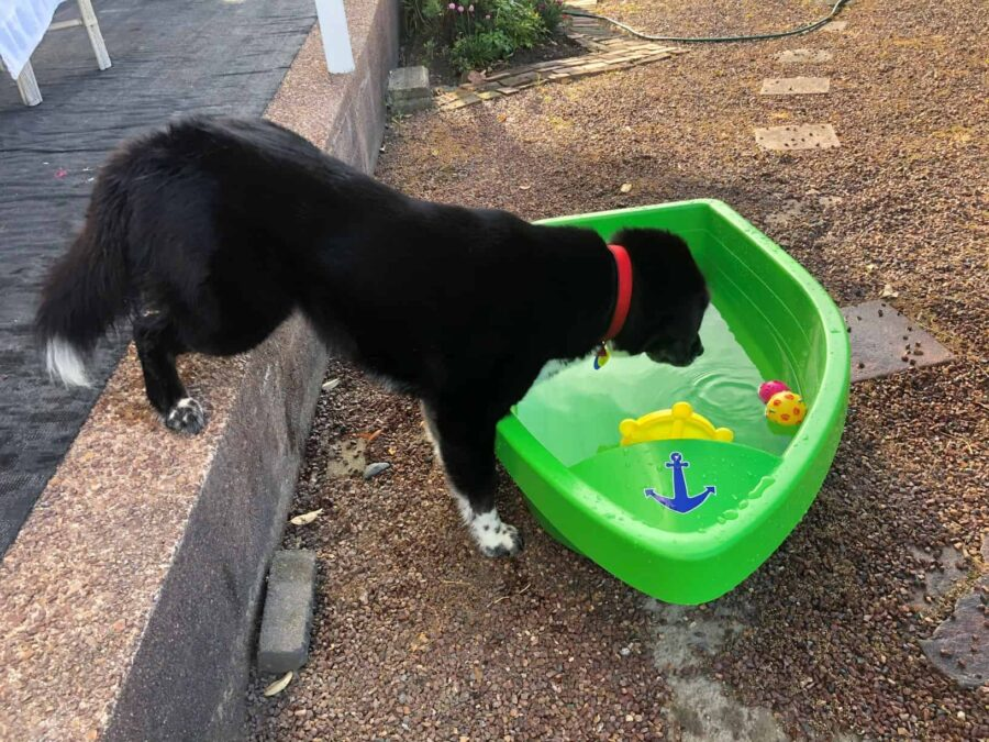 How long after neutering can you bathe a dog ?