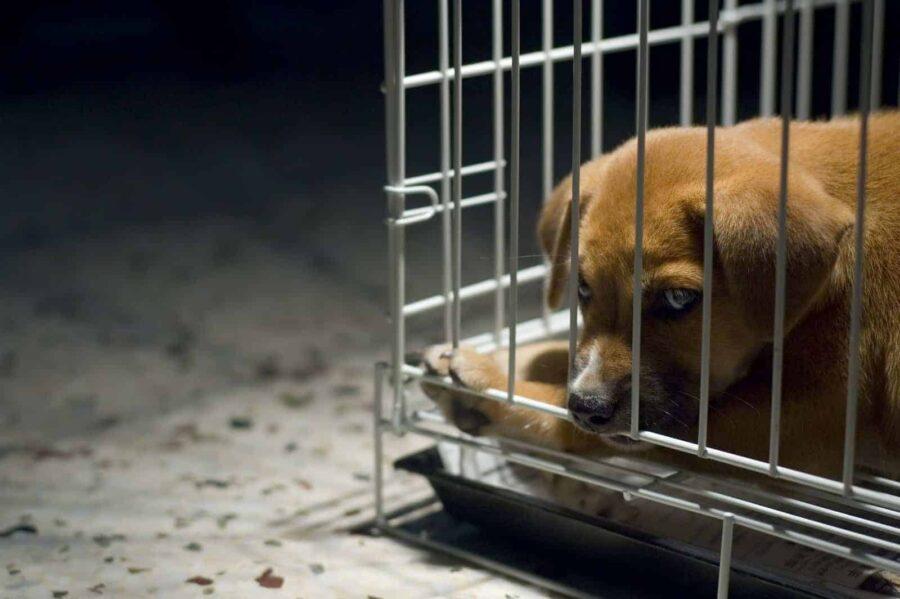 Sad puppy in cage