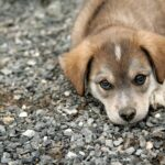 Nighttime diarrhea causes in puppies