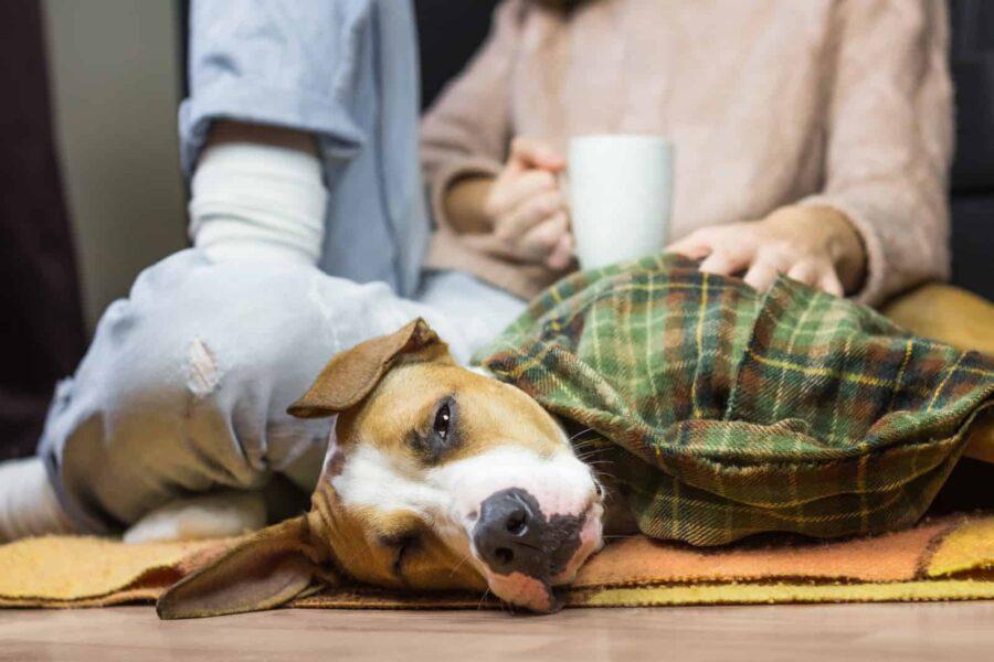 Sleepy dog in blanket lying down with human