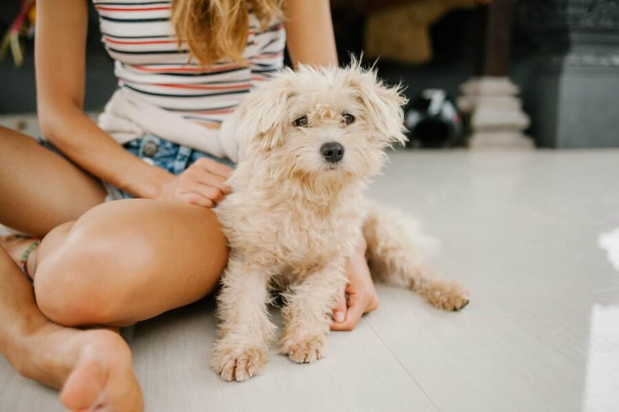Woman sitting with mini poodle on floor